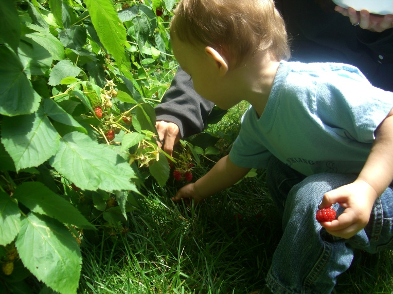 Photo of my son picking raspberries with my wife.