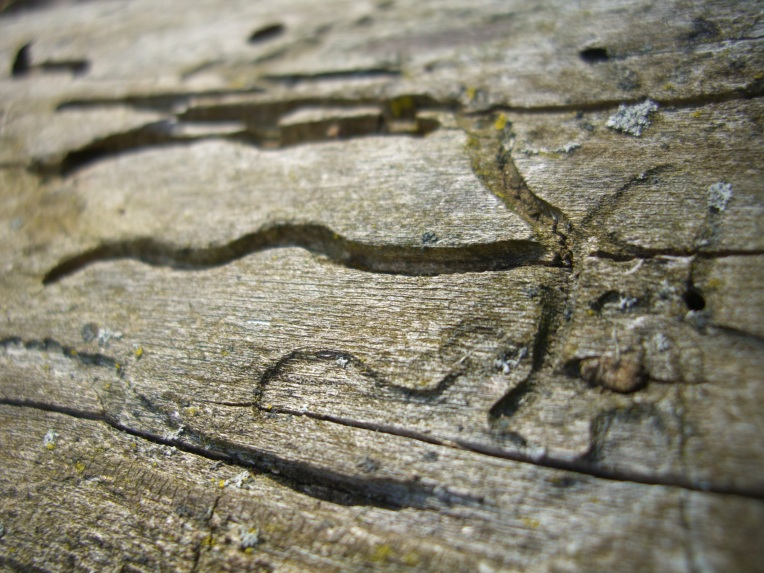 Close-up photo of designs in a termite eaten log.