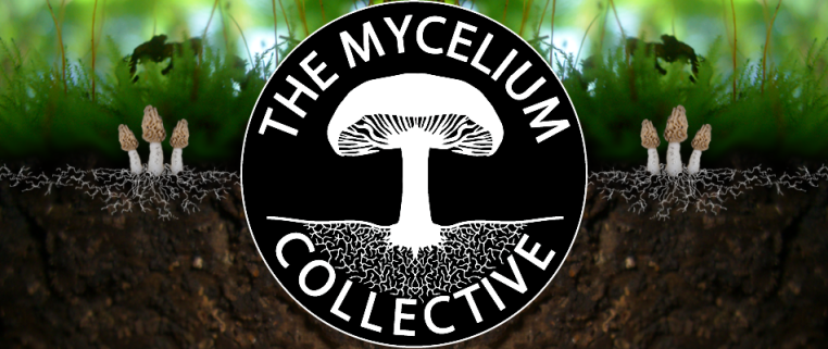 Mycelium Collective logo and banner with morel mushrooms and mycelium growing in the dirt with plants in the background.